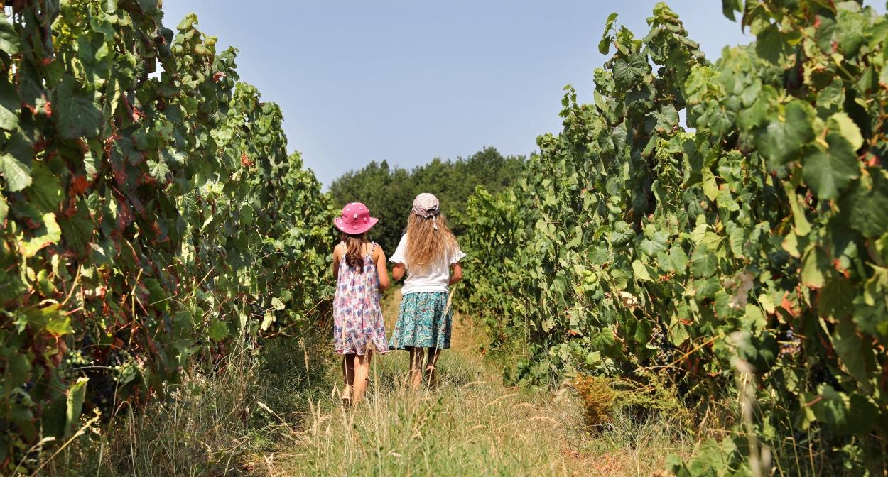Vignobles du Quercy Tarn et Garonne © Jérôme Morel