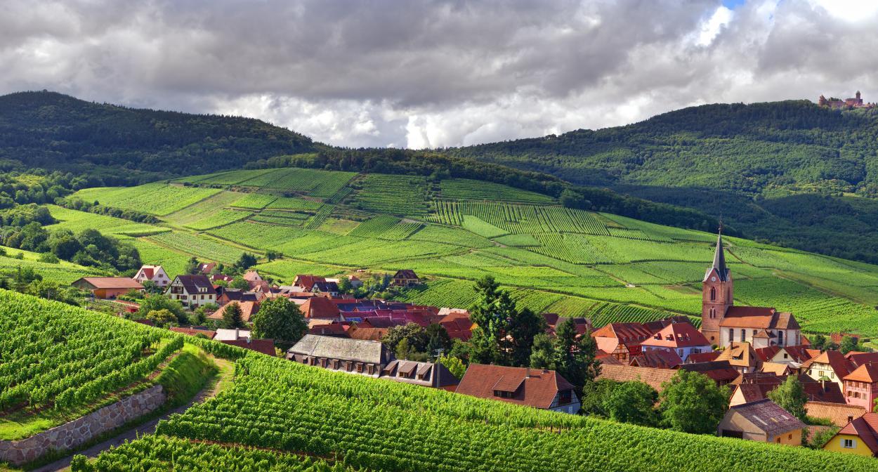 Visit the Alsace vineyards - wine tourism