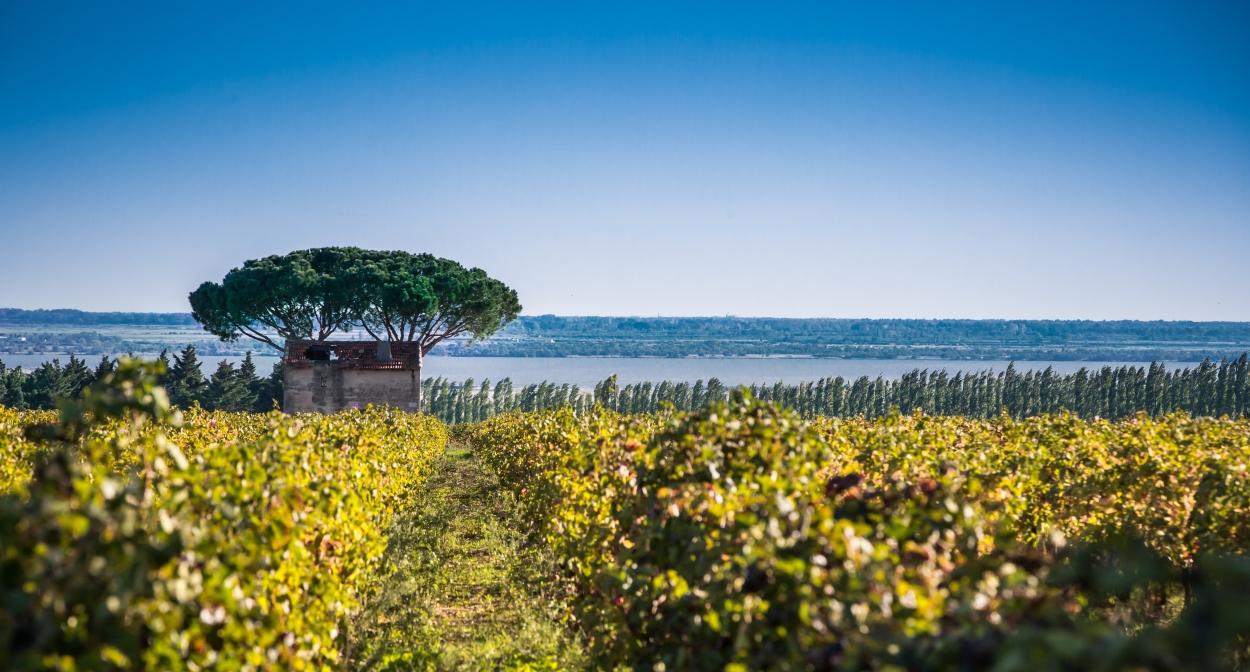 Les vignes d'Occitanie au naturel ©David_Z – AOC Costières de Nîmes