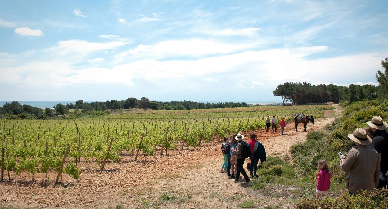 Tourisme dans les vignes ©AOC La Clape - Grand Narbonne Tourisme