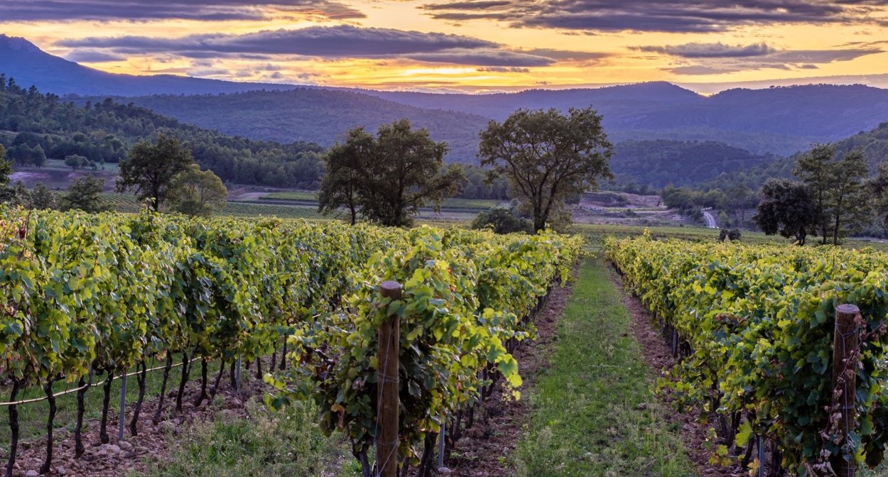 Vignoble en HVE et conversion bio © L'Escarelle
