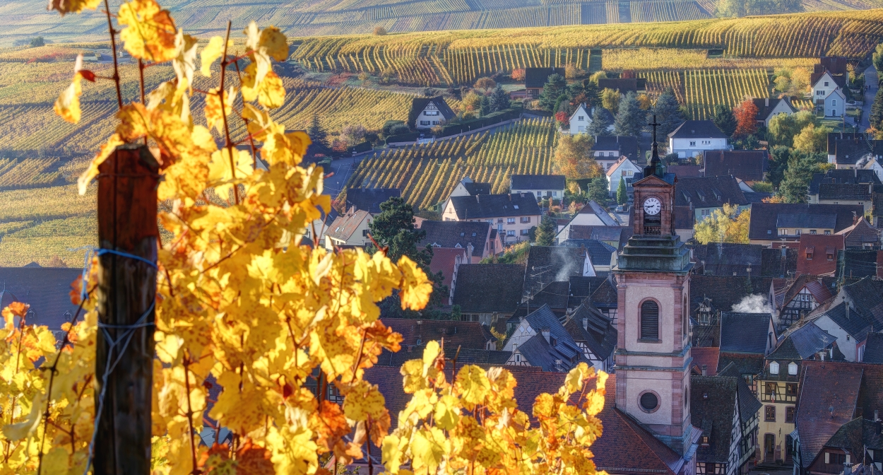 Riquewihr and its vineyards © Ophorus