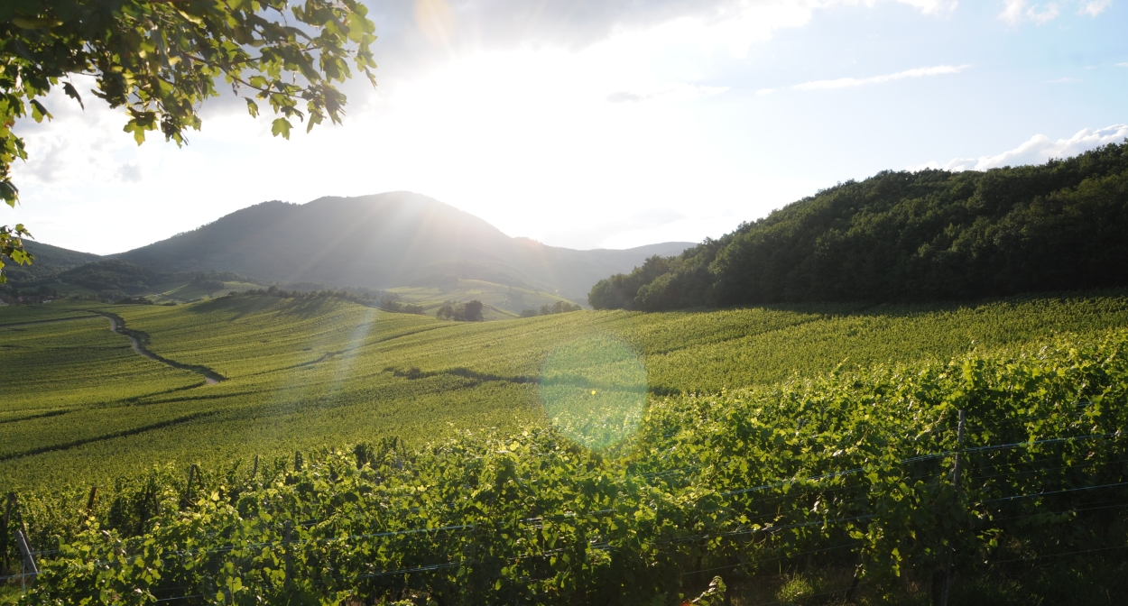 Dine in the heart of the Alsace wine region at Domaine Sohler © Sohler