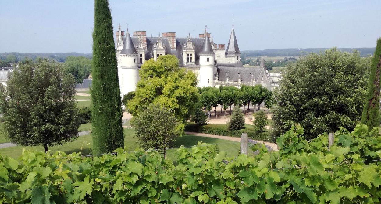 Château royal d'Amboise et ses vignes © Treney Vanessa_CRTCentreValdeLoire