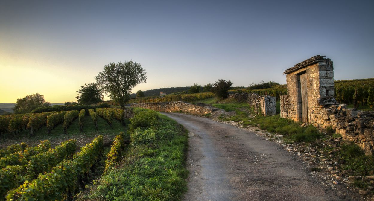 Winding burgundy roads