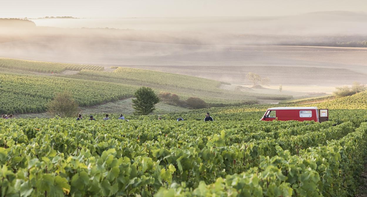 Balade dans les vignes champenoises ©Olivier_Frajman_Protographe