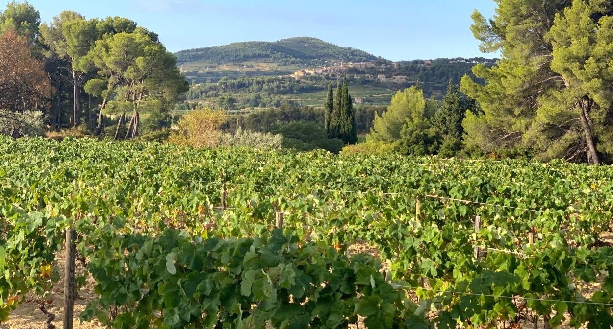 Les vignes de Provence Sud Sainte-Baume © cassb