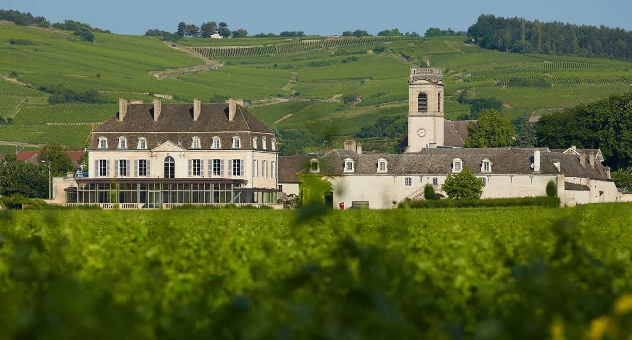 Unravel the mysteries of Burgundy's diverse appellations and villages © Château de Pommard