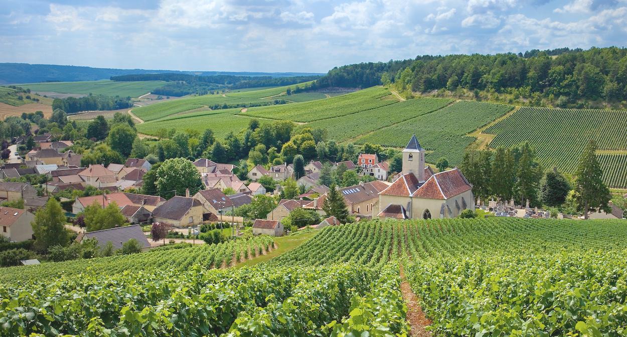 Visiter Le Vignoble De Champagne