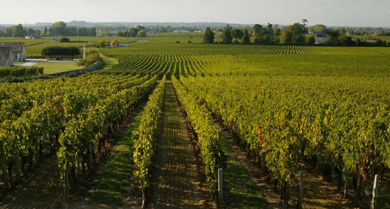 The vineyards of Saint-Émilion © Relais & Châteaux