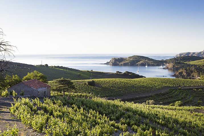 Vignoble Roussillon Méditerranée Maison Cazes Advini ©Clos de Paulilles