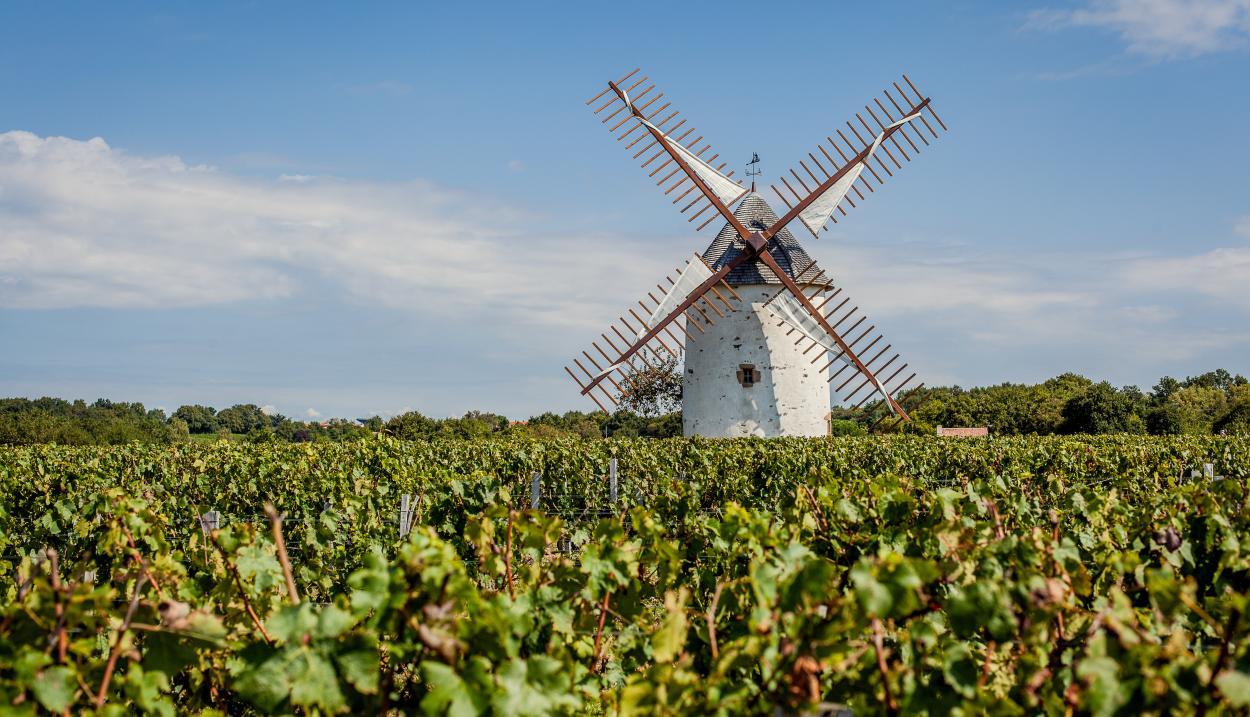 Les vignes de Vendée © Fanny Paris