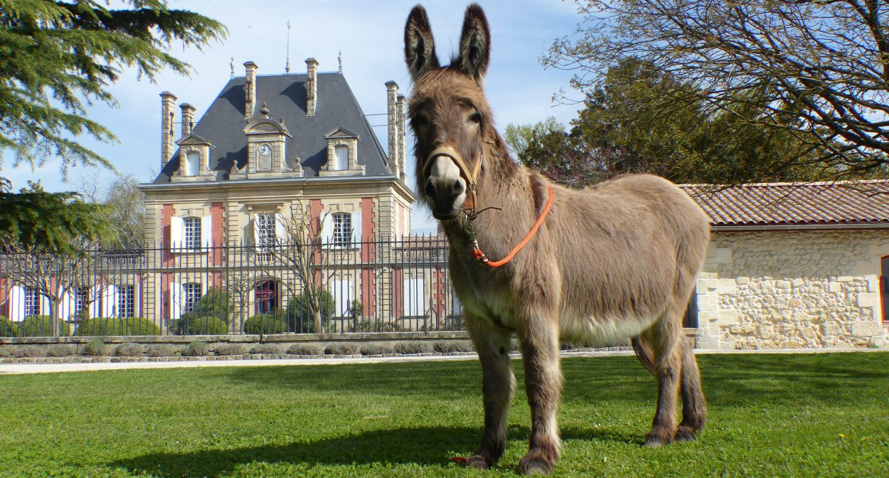 Château Saint Ahon and its donkey Mirabel © Château de Saint Ahon