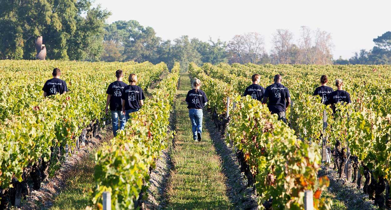 Dans les pas du vigneron au Château Smith Haut Lafitte