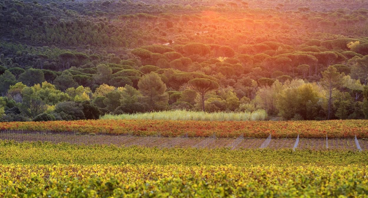 The landscapes of Dracénie Provence Verdon © Dracénie