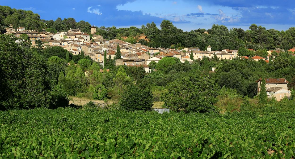 LThe vineyard of Dracénie Provence Verdon © Dracénie