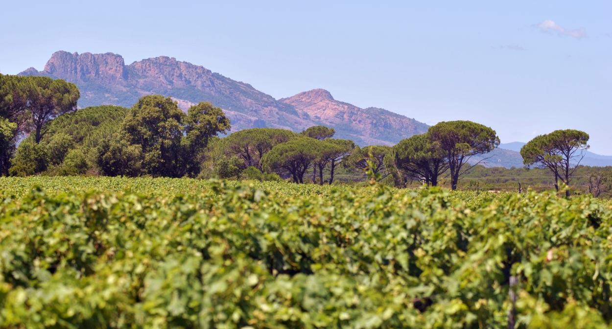 Discover Provence's wine region ©Cédric SKRZYPCZAK-CIVP