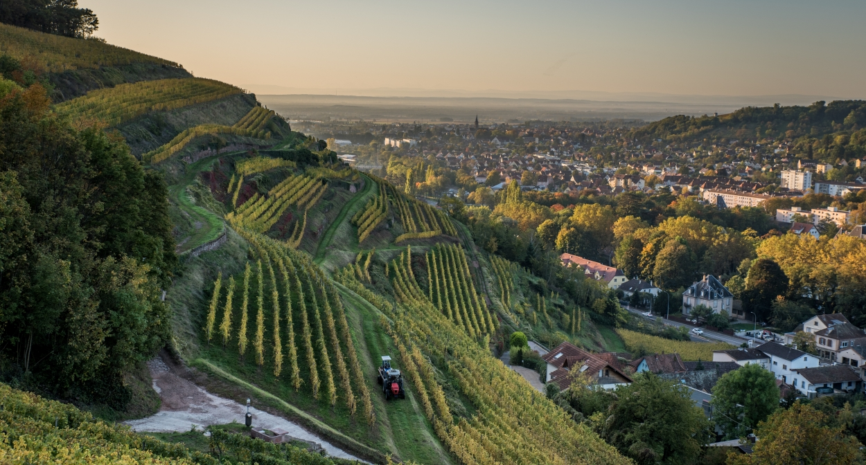 Le vignoble de Guebwiller © Vincent Schneider