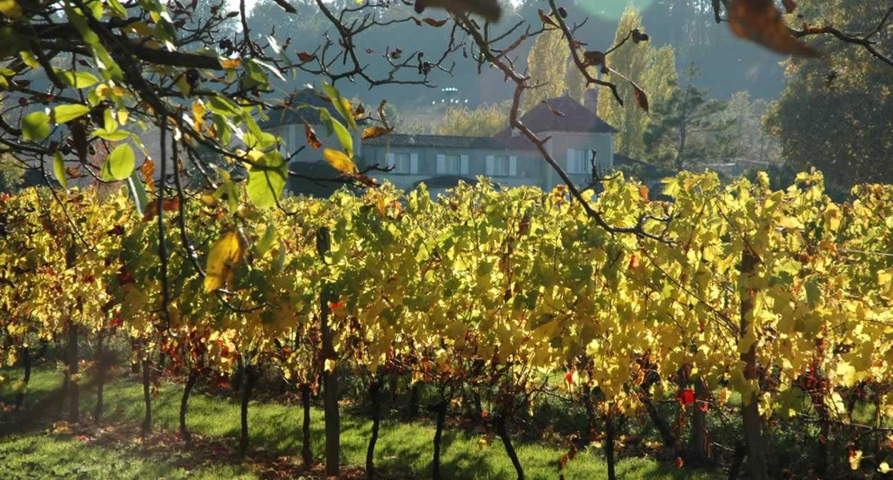 Louez vos propres pieds de vignes © Domaine de la Queyssie