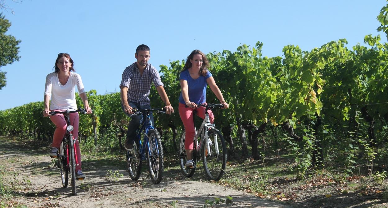 Les vignes des Charentes bordant la Flow Vélo © Stéphanie Nadouce