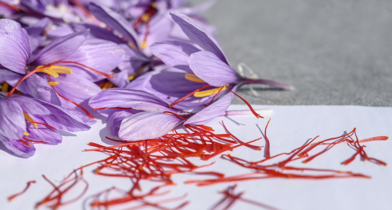 Saffron, from flower to spice © François Xavier Emery, OTC DLVA