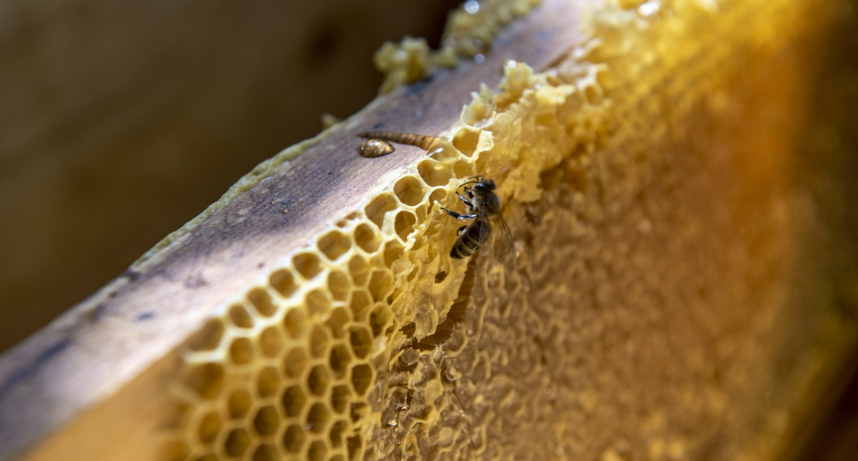 The artisanal honey of Haute-Provence © François Xavier Emery, OTC DLVA
