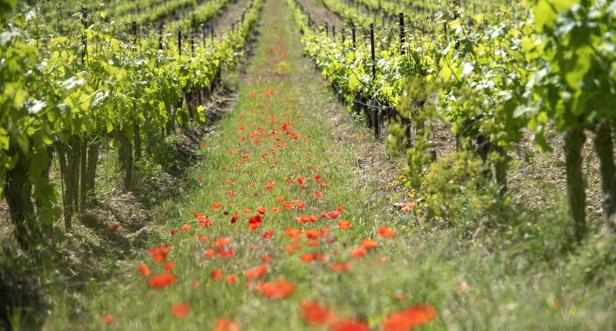 Randonnée dans les vignes à Pierrevert© François Xavier Emery, OTC DLVA