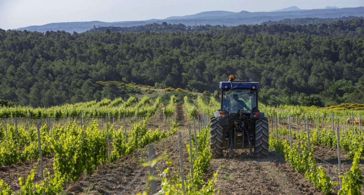 Organic and sustainable wine production © François Xavier Emery, OTC DLVA