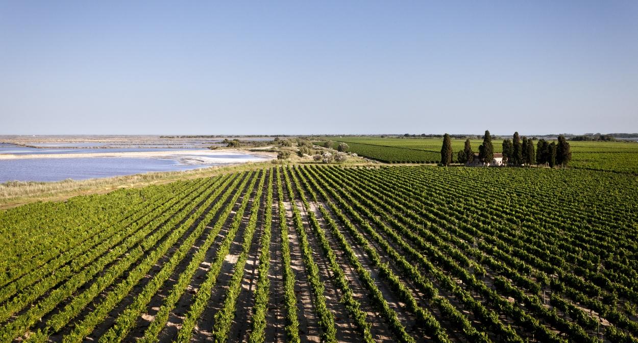 Domaine Royal de Jarras vineyard © Grands domaines du littoral