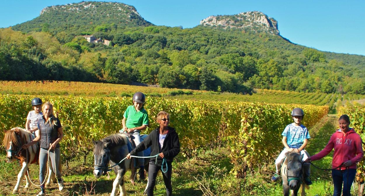 Les Vignes Réboussièresdonkey ride in the vineyard © Les Vignes Réboussières