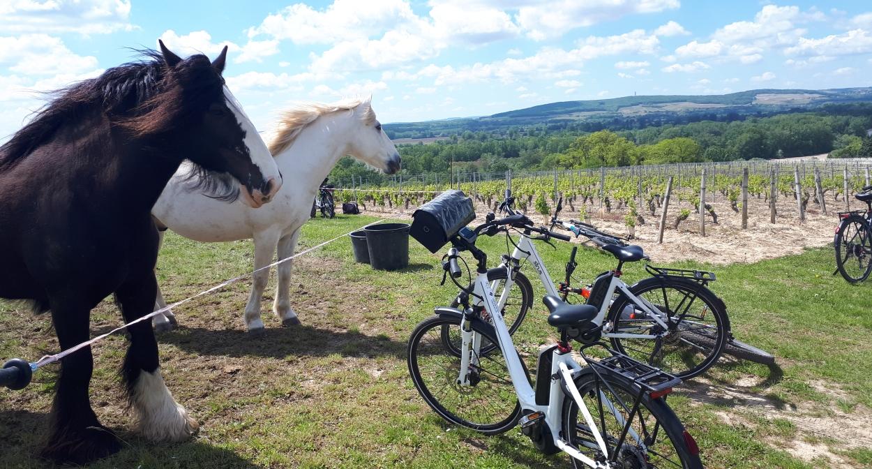 Chevaux le long de la balade à vélo dans les vignes ©Igers Bourgogne