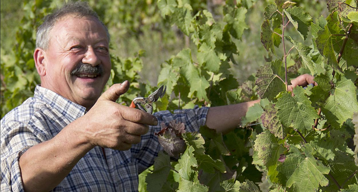 Jean-Luc Matha, Marcillac, South West vineyard