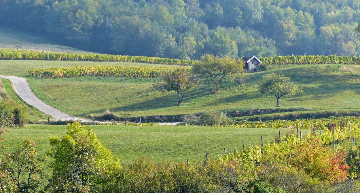 Jura's vineyard near Arbois ©Julie Hann – BFC Tourisme