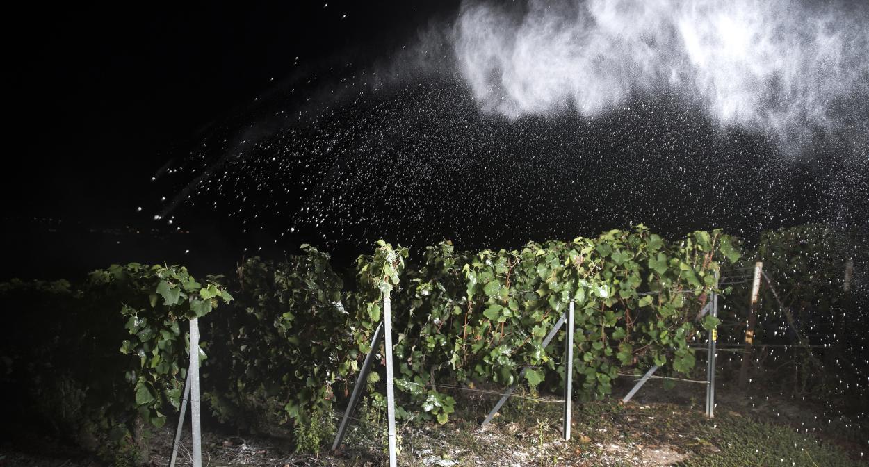 La nuit-racines_Champagne_Maison Roederer ©Lucie Jean