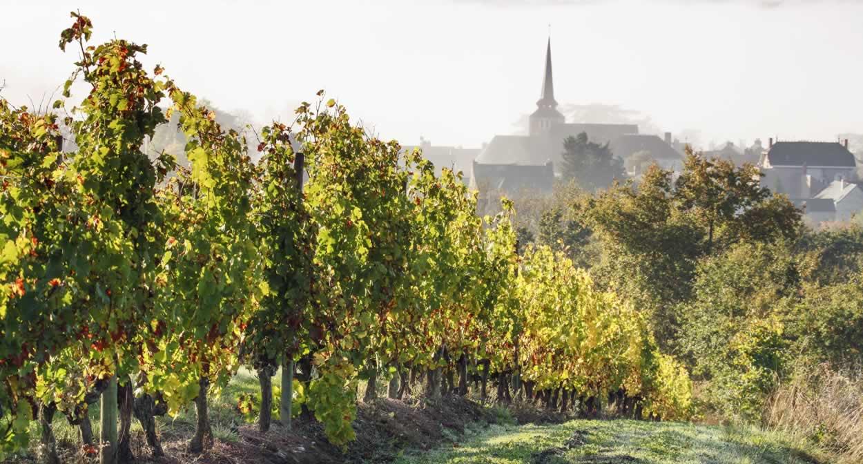 Savennières vineyards ©Relais & Châteaux