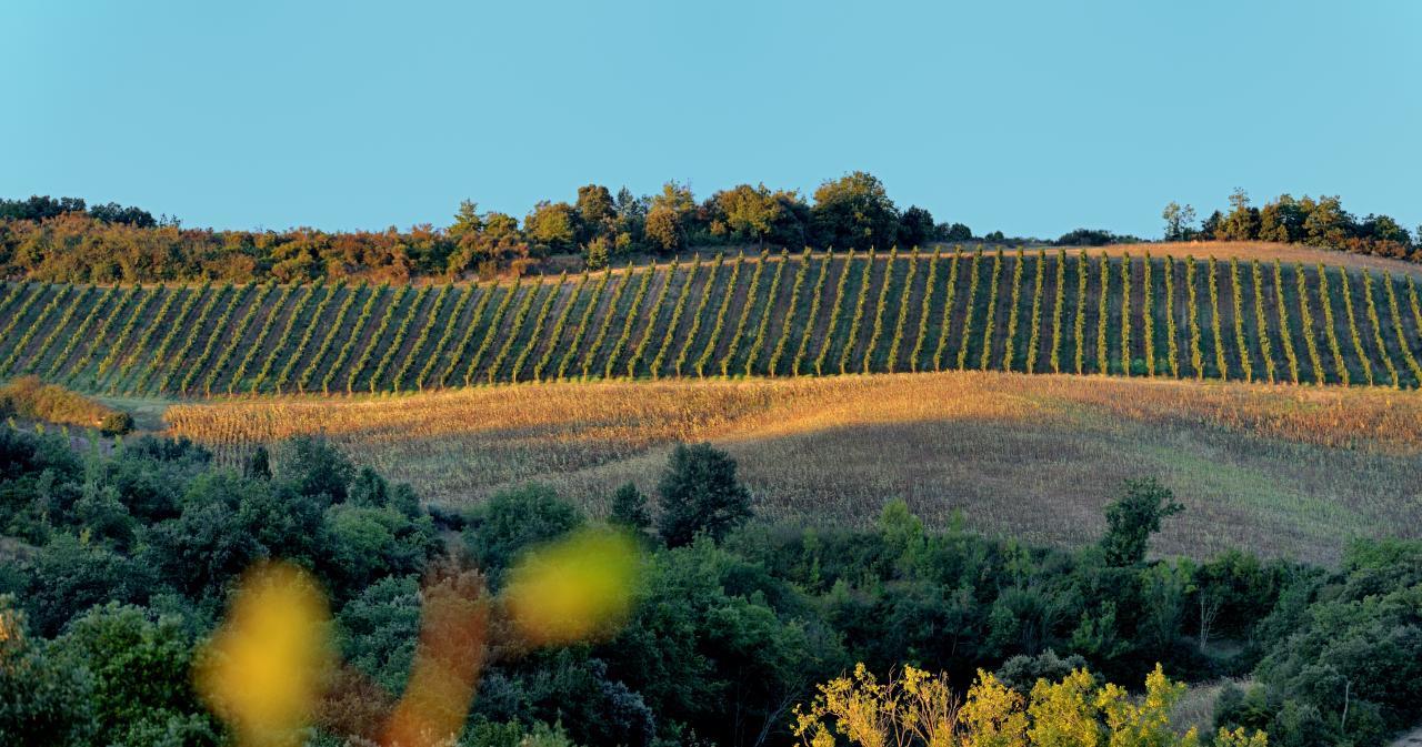 Limoux, Vineyard, Languedoc