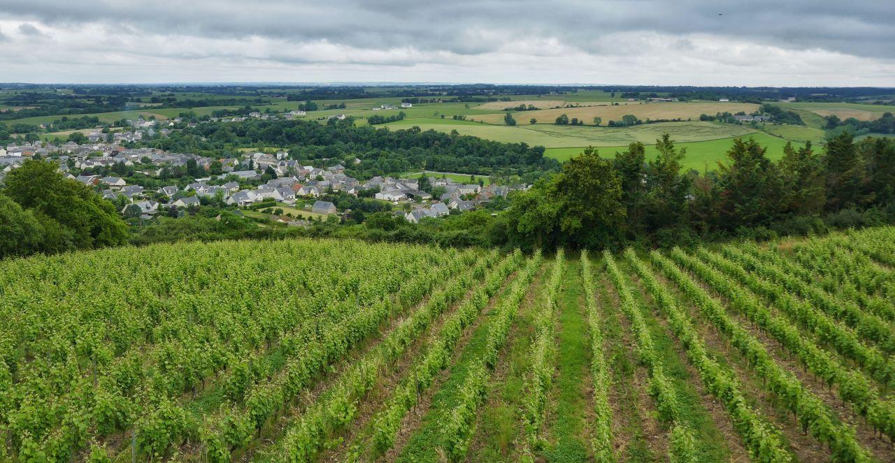 Vines in the Loire Valley ©Leah Walker