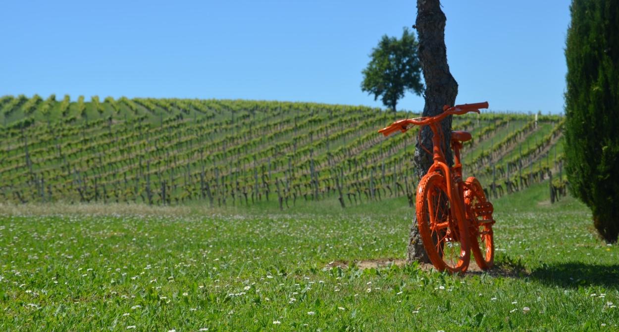 Pédalez dans les vignes © IVBD