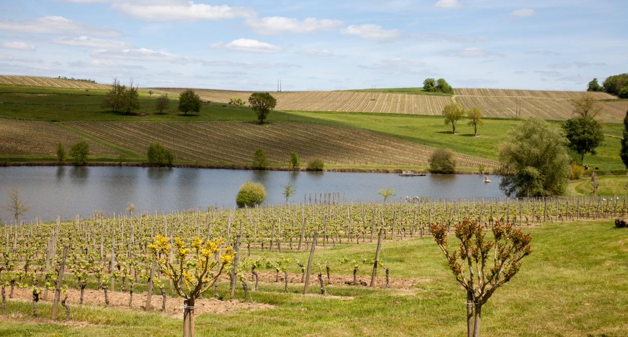 Un vignoble respectueux de l'environnement © Interprofession des Vins de Bergerac et de Duras