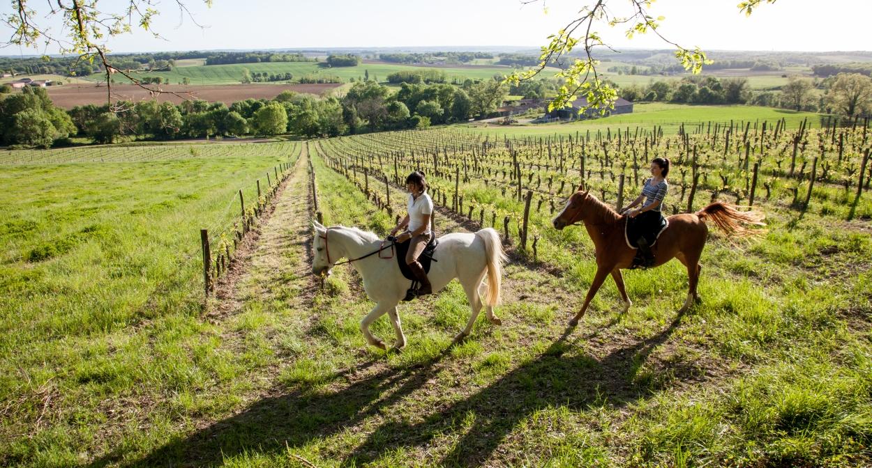 Balade à cheval dans le vignoble © Interprofession des Vins de Bergerac et de Duras