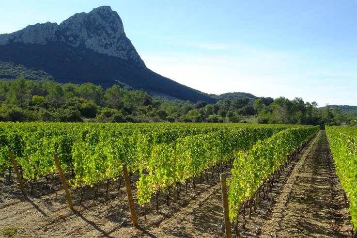 Pic Saint-Louis gourmet walks wine tourism languedoc ©CIVL