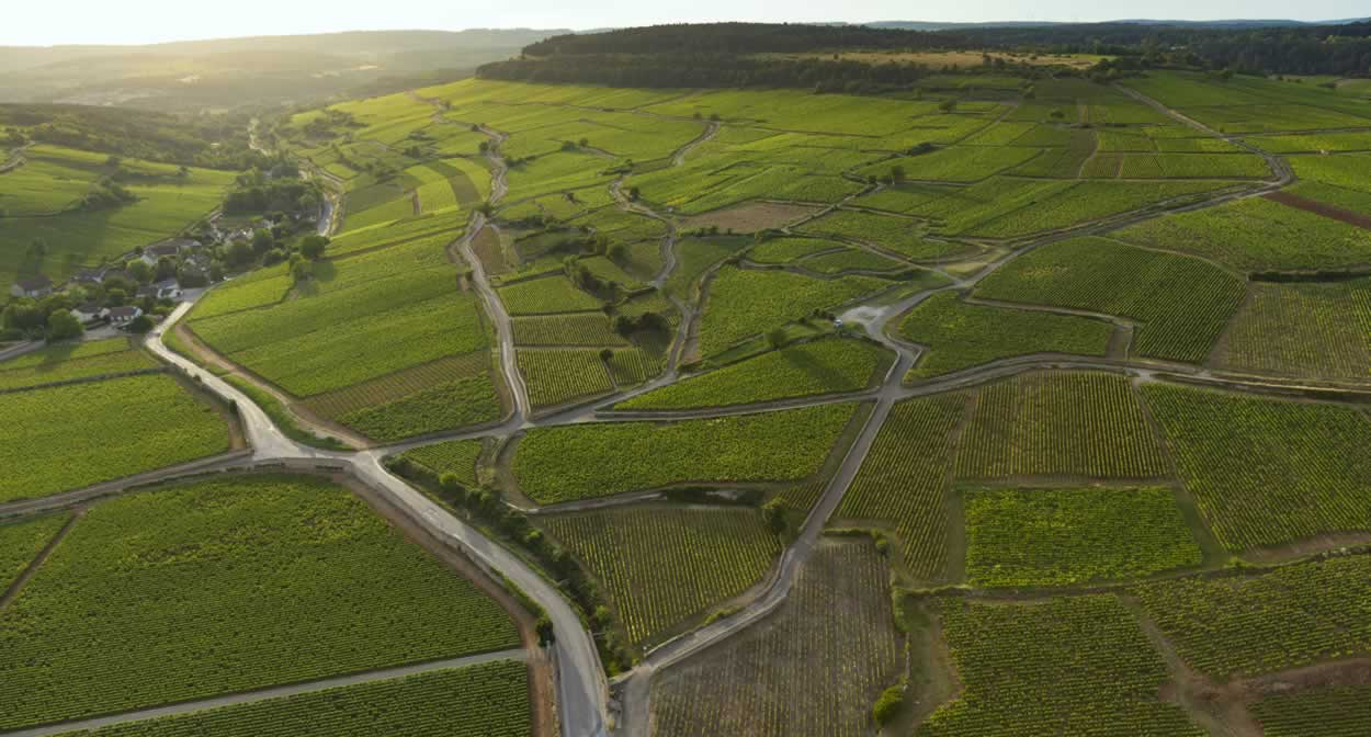 The secrets behind Burgundy's success are unearthed during the Climats Experience © Château de Pommard