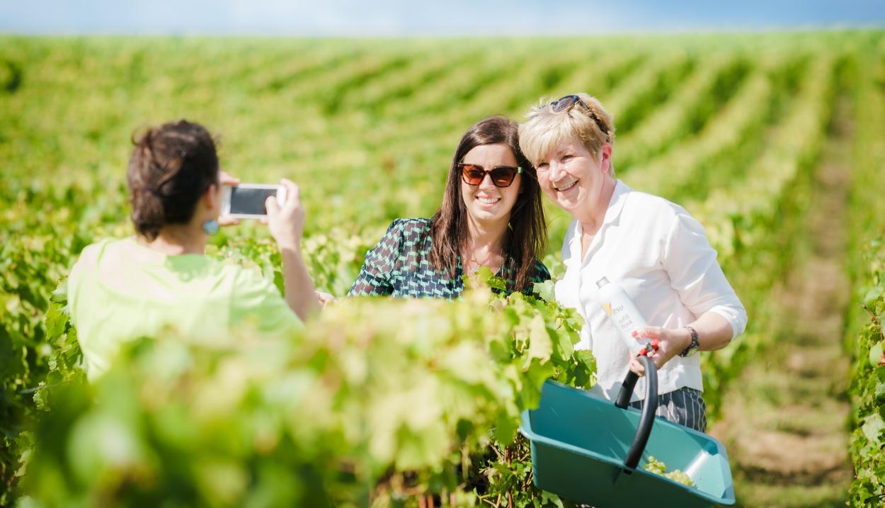 Une journée dans les vignes en Champagne © Cyrille Beudot