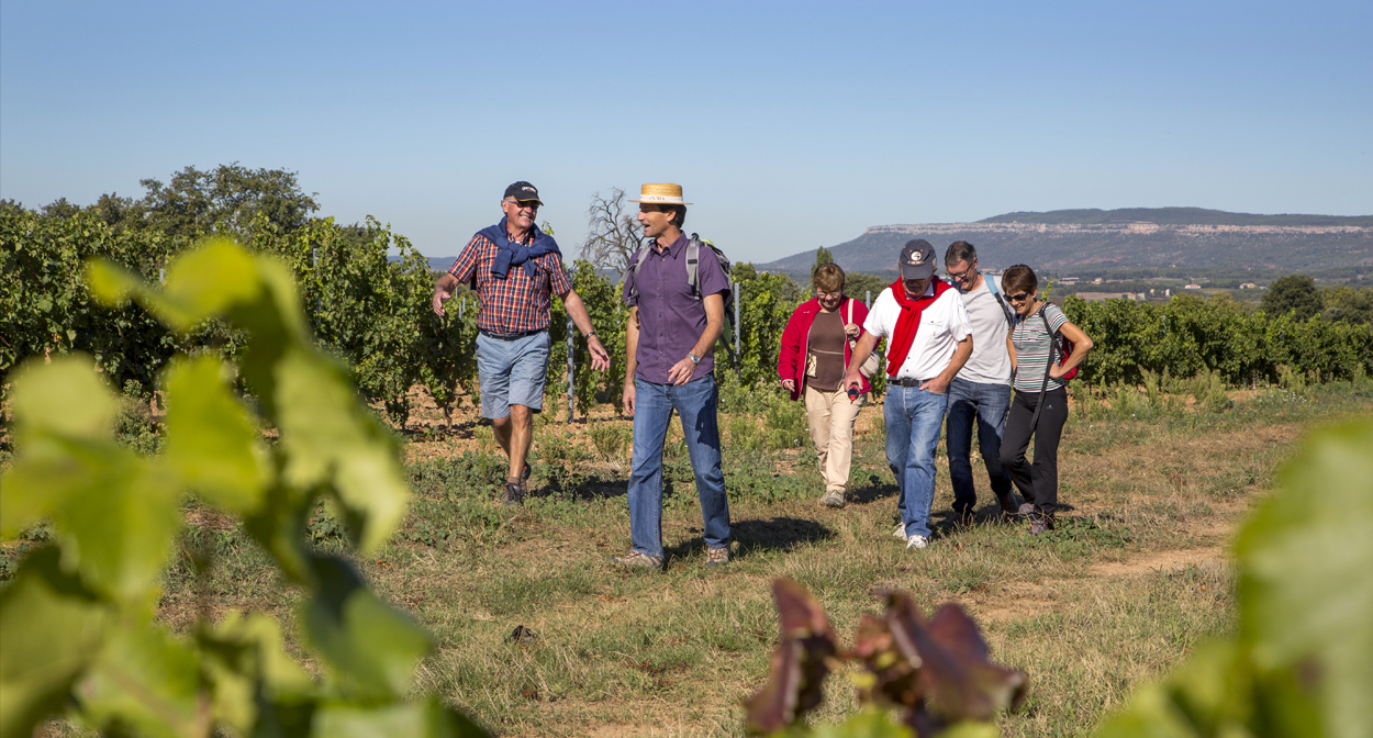 Walk in the vineyard of Provence