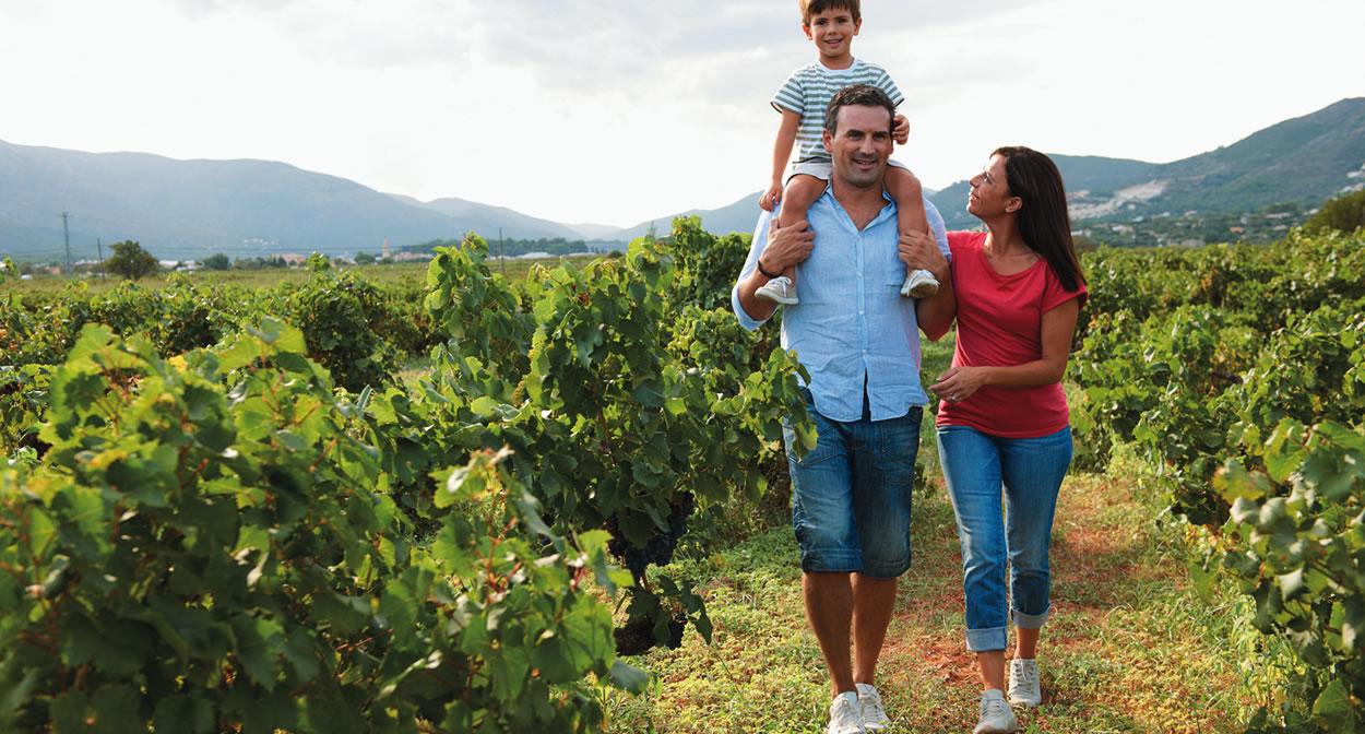 Les Vignerons Indépendants vous invitent à découvrir leurs domaines viticoles © Vignerons Indépendants de France