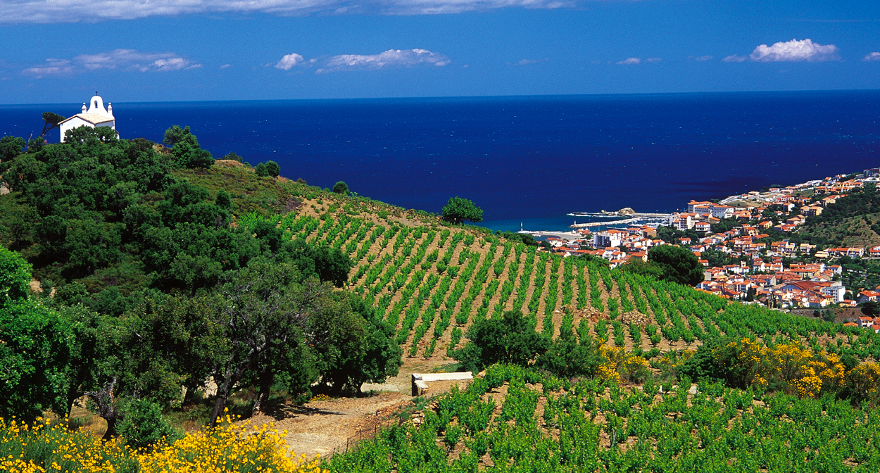 Vineyard of Roussillon