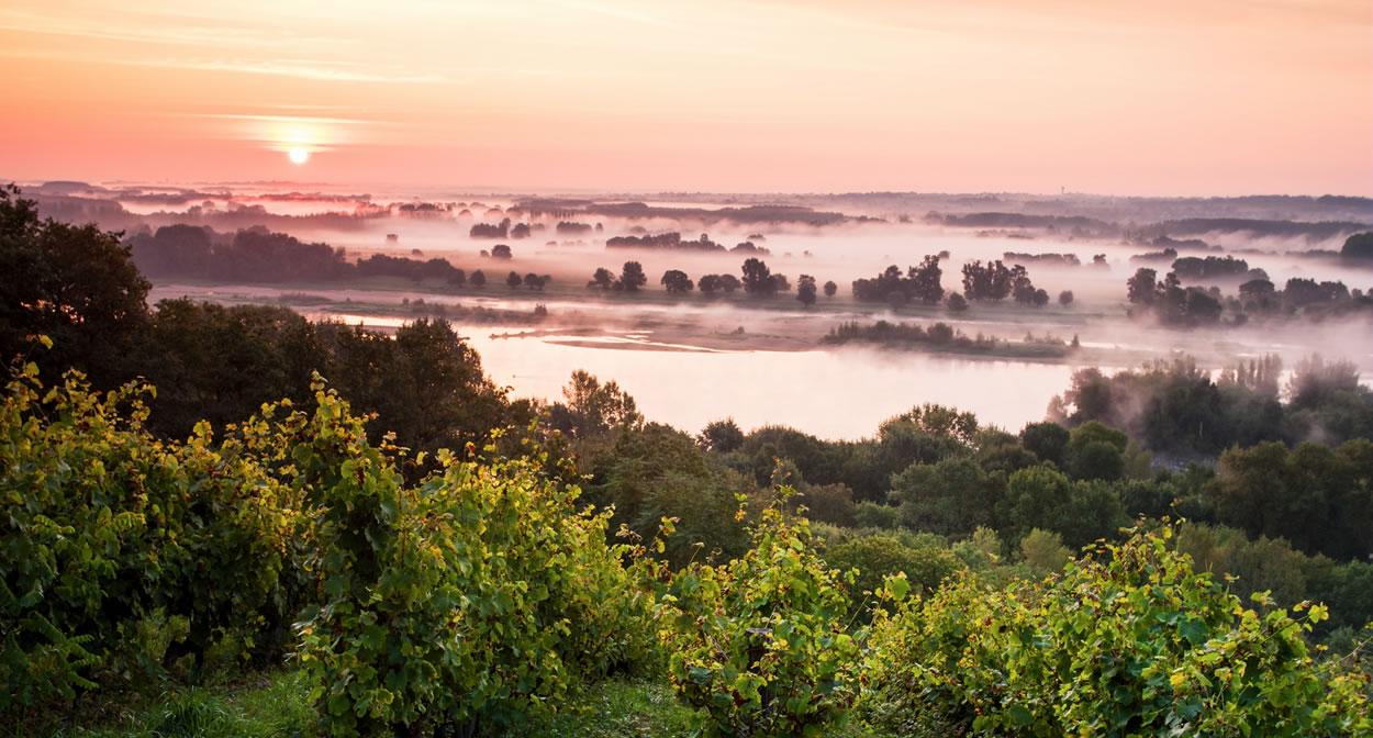 Vignoble du Savennières : la Coulée de Serrant en bord de Loire. Lumière du matin © Ph. Caharel