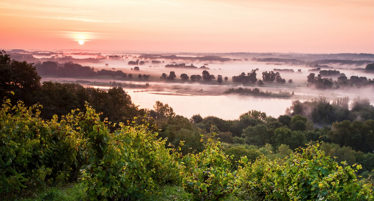 Savennières wine region: La Coulée de Serrant on the banks of the Loire. Morning light © Ph. Caharel