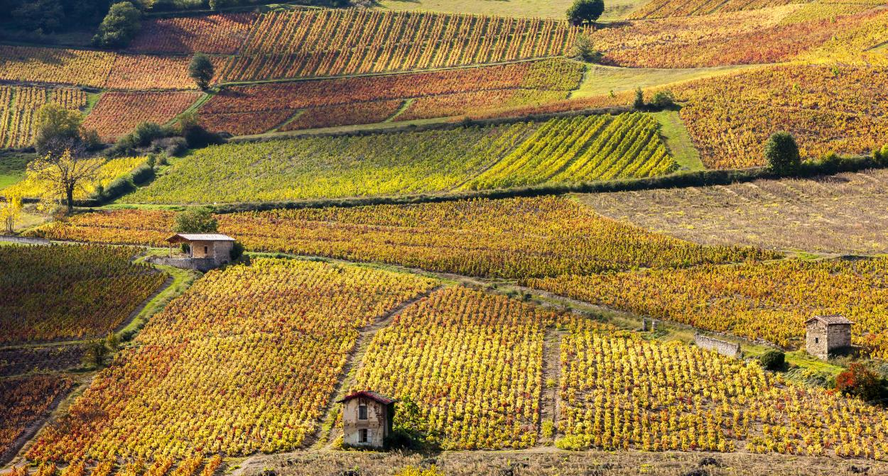Wine route in Alsace © Grecaud Paul