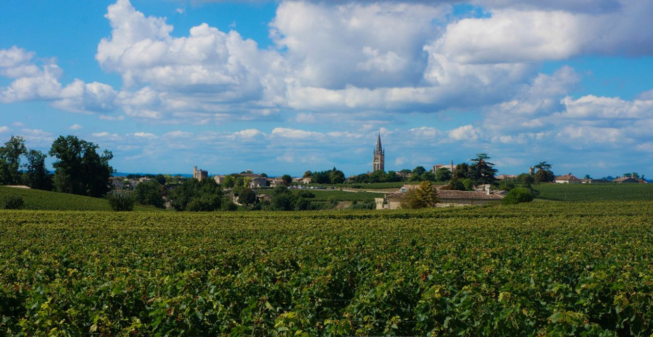 Carol Cain in Saint -Emilion, Bordeaux Vineyard